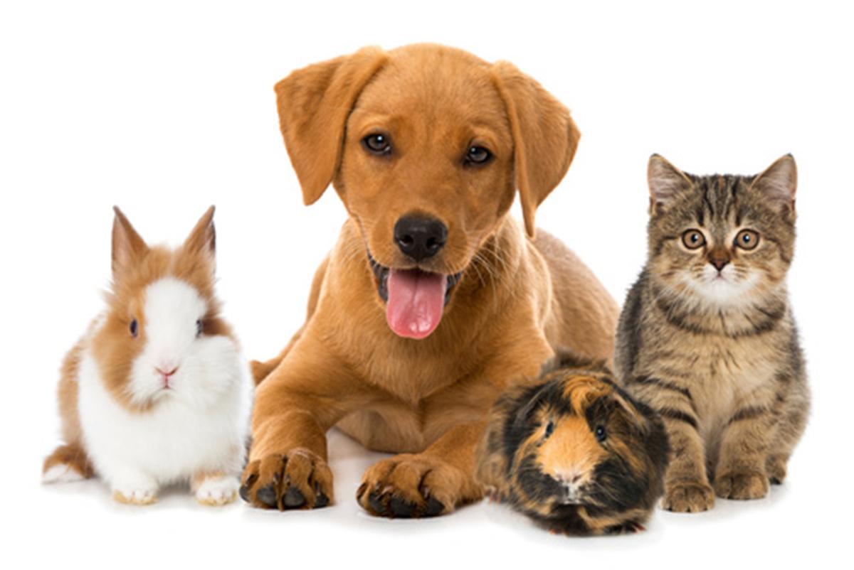 Beste Bewerbungsschreiben Für Tierarzt Aufheben Ideen - Entry Level ...